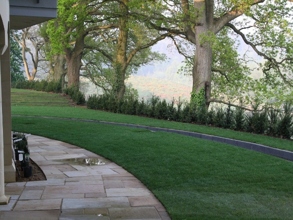 Shaped Lawn, Path & Water Feature